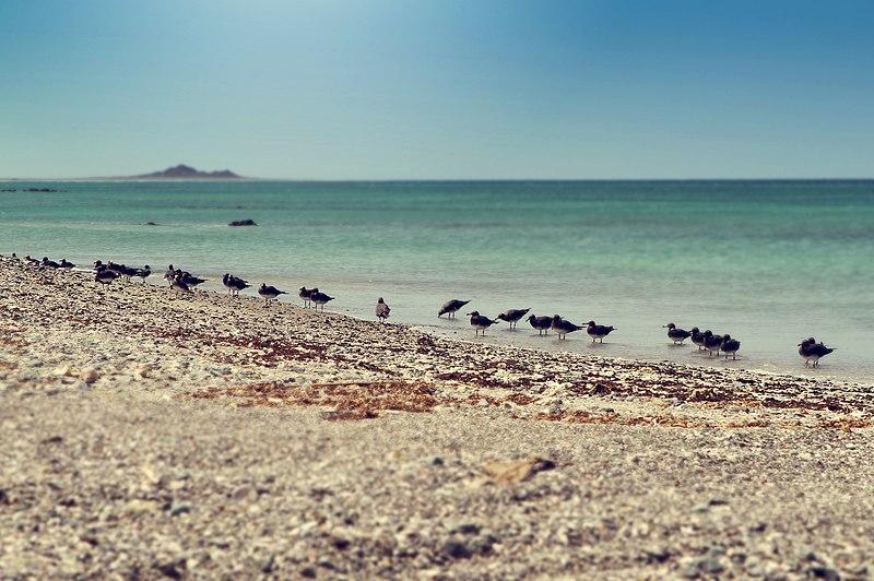 File:Masirah Island2.jpg