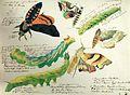 Max Gabriel von 4 Schmetterlinge und 3 Raupen Muenchen.jpeg
