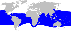 Range of megamouth shark (in blue)