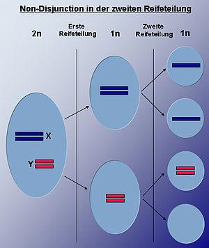Meiosis II Non Disjunction.jpg