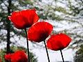 Memorial Day. York, Maine (7305788240).jpg