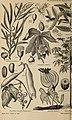 Meyers Konversations-Lexikon - eine Encyklopädie des allgemeinen Wissens (1890) (14592787218).jpg