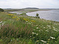 Mid to upper reach of Ythan Estuary looking west, Aberdeenshire.jpg