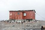Mikkelsen Harbour-2016-Trinity Island (D'Hainaut Island)–Gentoo penguins (Pygoscelis papua) and Refugio Naval 01.jpg