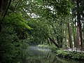 Mist of the Gods (pond at Ise Grand Shrine at 5 am), Mie Prefecture; July 2015.jpg