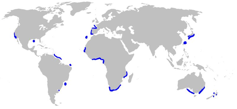 Distribución de Mitsukurina owstoni(en azul)
