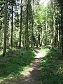 Mixed stand - Micheldever Woods - geograph.org.uk - 1672146.jpg