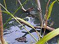 Mixt flock - wetland 4.jpg