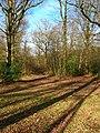 Moat Wood - geograph.org.uk - 323309.jpg