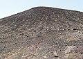 Montana Colorada - plant - Fuerteventura - 23.jpg