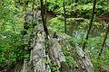 Morris Arboretum - DSC00157.JPG