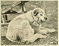 Mosquitoes attacking dog canadian arctic expedition volume 3.jpg