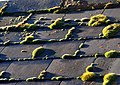 Moss on the roof - geograph.org.uk - 1062007.jpg