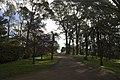 Mount Wilson NSW 2786, Australia - panoramio (70).jpg
