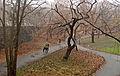 Mounted police, Central Park.jpg