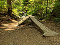 Mt Fromme - Roadside Attraction trail feature.jpg