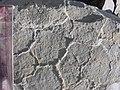 Mudcracks in Silurian Limestone in New York state.jpg