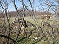 Mughni Saint Gevorg Monastery (khachkar) 10.jpg