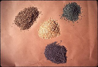 File:NATURAL GRAIN IN CENTER, BLUE OATS POISIONED WITH PIVAL
