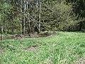 ND Pflanzenstandort Waldwiesen.jpg