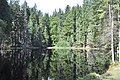 NPR Boubínský prales 20120910 02.jpg
