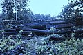 Nan Madol 13.jpg
