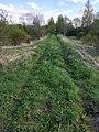 Narrow-gauge mound of the Izdeshkovsky lime plant.jpg