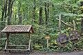 Nationalpark Hainich (3).jpg