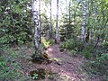 Natur pur am Birkensee 2 - panoramio.jpg