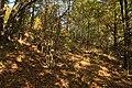 Natural monument Na Strazi in autumn 2011 (2).JPG