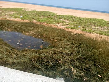 Naturally forming estuarine ecosystem.jpg