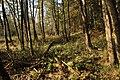 Nature reserve Dobrockovske hadce in autumn 2011 (28).JPG