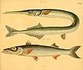Naturgeschichte in Bildern mit erläuterndem Text (Taf. CXII) (6059225312).jpg