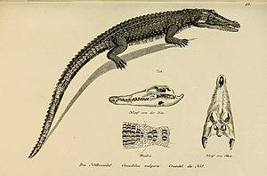 Heinrich Rudolf Schinz - Image: Naturgeschichte und Abbildungen der Reptilien (6059219069)