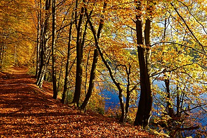 Naturpark Schlaubetal, Großer Treppelsee Westufer 1.jpg