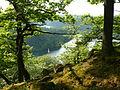 Naturschutzgebiet Hünselburg Edersee Urwaldsteig Mai 1.JPG