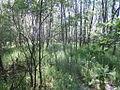 Naturschutzgebiet Tävsmoor Kreis Pinneberg (Schleswig-Holstein) 07.JPG