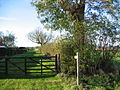 Near Little Bustard Farm - geograph.org.uk - 82197.jpg