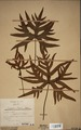 Neuchatel Herbarium Types NEU000113037.tif