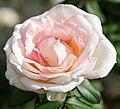 New York Botanical Garden (8076047685).jpg