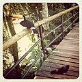 No meu do caminho haviam dois tucanos -o (5456127882).jpg