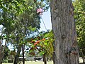 Nov 2012 One of the many in flower at the moment. R.H.S. of 3 rd fairway. - panoramio.jpg