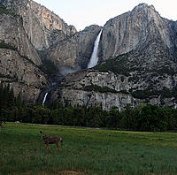 Odocoileus hemionus californicus and Yosemite Falls.jpg