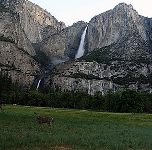 Yosemite Falls, Yosemite-Nationalpark
