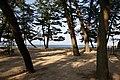 Ohama Coast Awaji Island Japan05s3.jpg