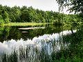 Okolica Jeziora Szawińskiego.jpg