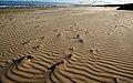 On the beach.Port Stephens NSW. (12065870185).jpg