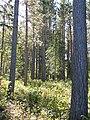 Open pine stand (6166378069).jpg