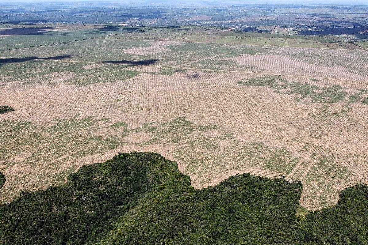 Deforestation of the Amazon rainforest - Wikipedia