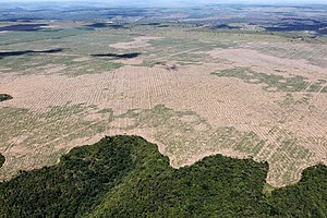 Huge and growing deforestation areas in Brasil